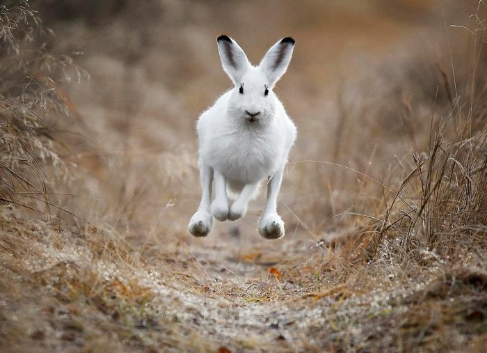 """Eskon kuva """"Täysillä"""" voitti vuoden 2010 Vuoden luontokuvakilpailun Nisäkkäät-sarjan."""